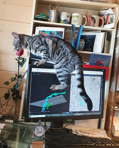 susi swag cat